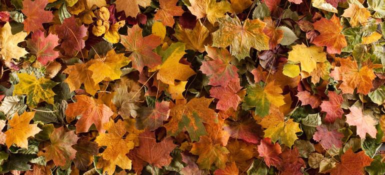 Las mejores actividades de otoño para decir adiós al verano con una sonrisa