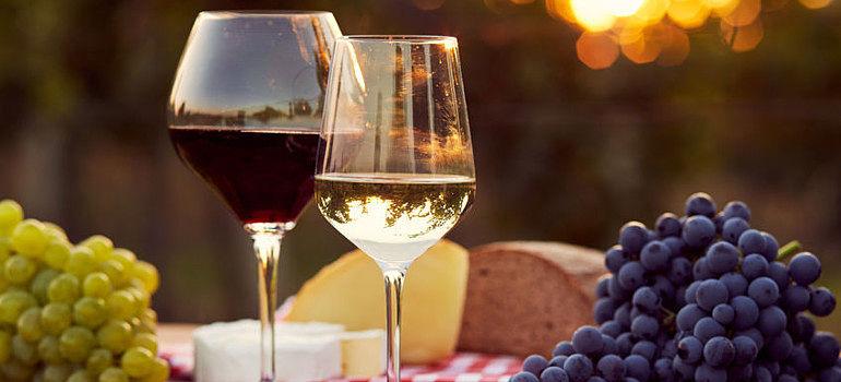 Los vinos ecológicos: una apuesta por tu salud y por el medio ambiente